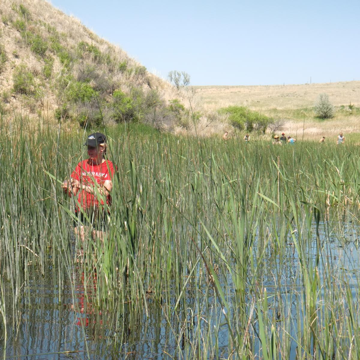 Student collecting samples in a wetland