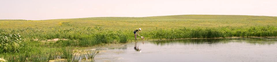 A student collecting samples from a water habitat